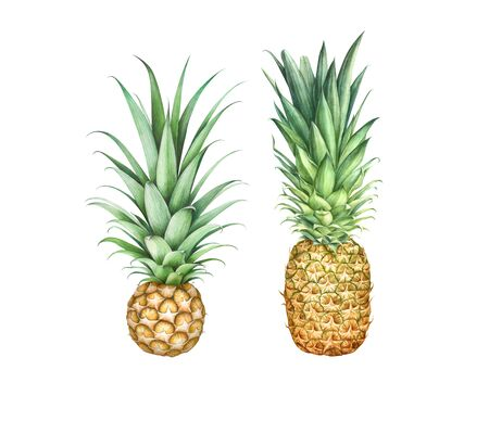 Set of two pineapples isolated on white background. Hand drawn watercolor illustration.