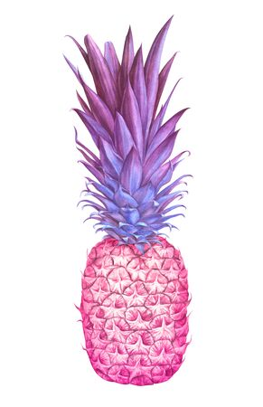 Pink pineapple isolated on white background. Hand drawn watercolor illustration.