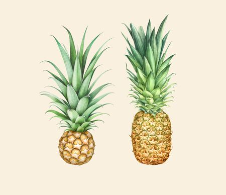 Set of two pineapples isolated on beige background. Hand drawn watercolor illustration.