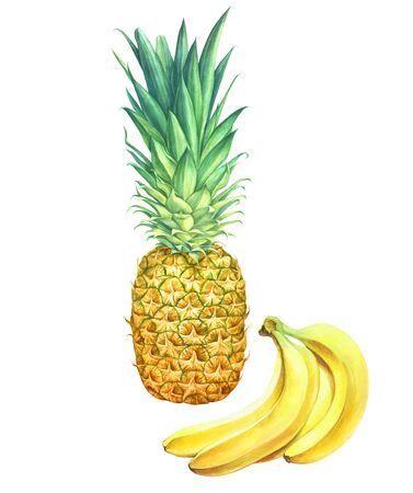 Pineapple and bananas isolated on white background. Hand drawn watercolor illustration. 스톡 콘텐츠