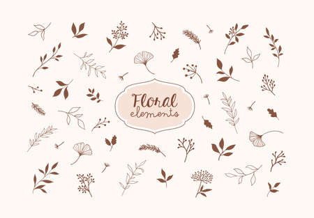 Set of vector plants and herbs. Hand drawn floral elements. EPS 10