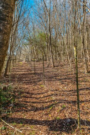 A hiking path along a wired metal post fence in a forest with fallen leaves on the ground and a vibrant blue sky on a sunny day in winter