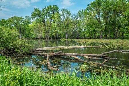 A serene stillness of the wetlands at the Trempealeau refuge along the Mississippi river in Wisconsin on a bright and sunny day in early summer Foto de archivo