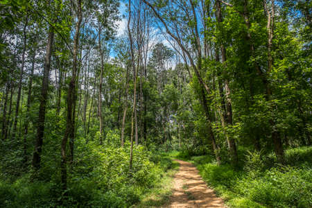 Hiking trail through the forest on a bright warm summer day with shadows cast from the trees with the vibrant blue sky and fluffy clouds in the background