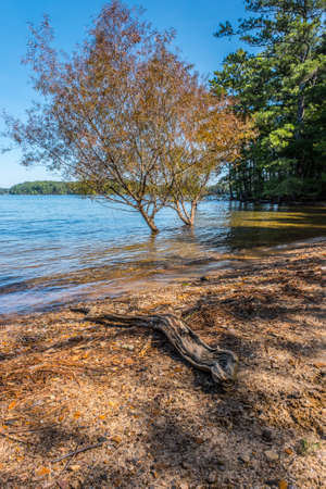 Two trees in the water at the lakeshore submerged from lots of rain with a log laying on the beach in the foreground and the woodlands in the background on a clear bright day in early autumn