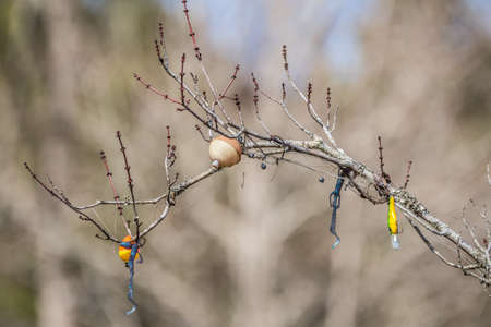 A bobber with weights and sparkling rubber worms and plastic lures with rusty hooks all tangled in a branch hanging over the water at the wetlands on a sunny day in winter