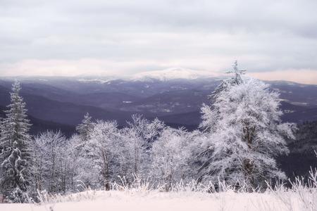 Winterlandschaft am großen Arber in Bayern Standard-Bild - 77827303