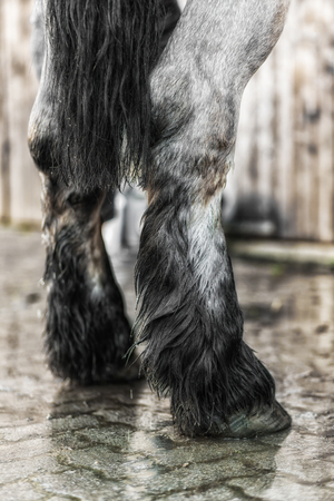 Close-up from legs of a horse beeing washed