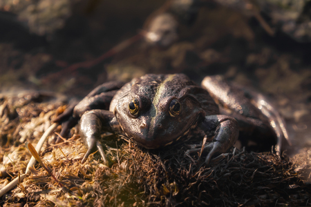 A frog sitting on the water and sunbathing