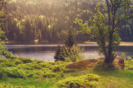View at the little lake arber, Bavaria Stock Photo