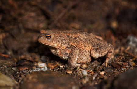 Toad on the forest floor