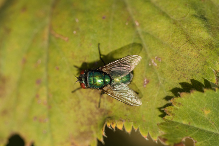 View of fly sitting on a leaf Stock Photo
