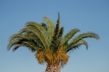 Palm tree in Spain against a blue sky
