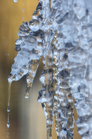 Icicles in the winter