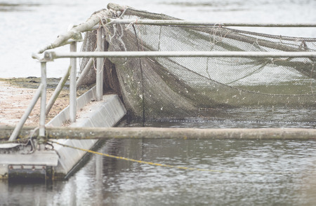 A boat dock with device and net for fishing