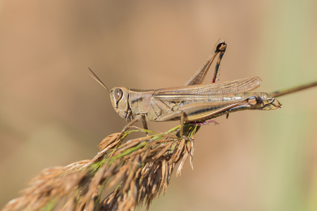 A grasshopper is sitting on a branch Stock Photo