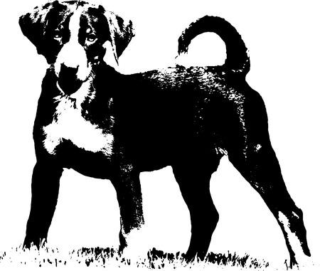 Appenzeller puppy - Illustration Stock Photo