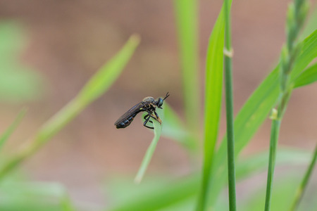An insect crawls up on the grass outside