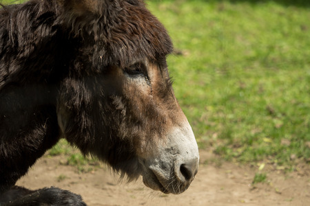 The head of a donkey in the sun Stock Photo