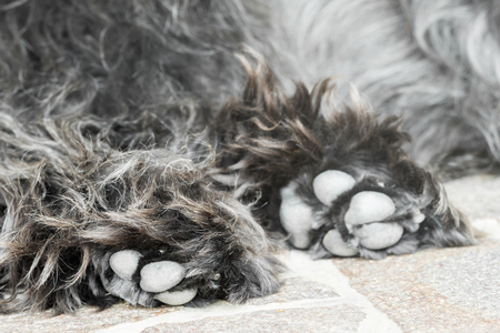 Close-up of hairy dog paws Banco de Imagens