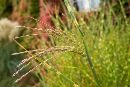 Fine plant with rain drops