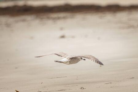 A group of wild birds on the beach Stock Photo