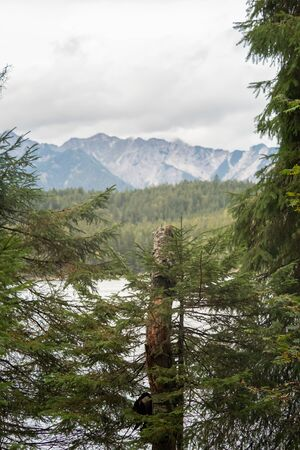 View to the Eibsee between trees and shrubs
