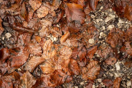 Old autumn leaves lie on the floor with stones Stock fotó