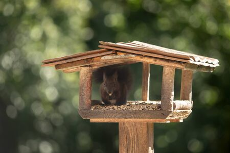 A sweet squirrel sits in a birdhouse and eats Stock fotó