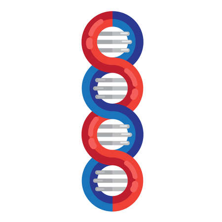 DNA strands molecule vector illustration. Spiral genetic dna medical icon. Helix structure symbol. DNA strands Magnification double helix structure blue and red