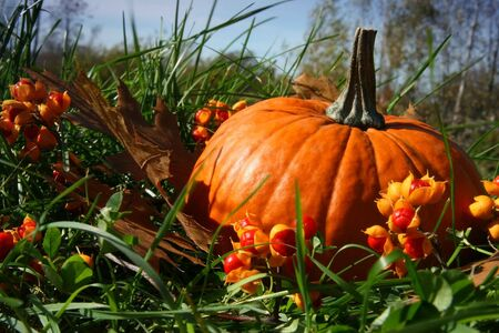 bountiful: Pumpkins in the grass among fallen leaves Stock Photo