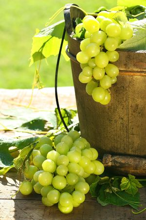 the fruitful: Green grapes and leaves in an old bucket