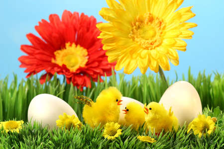 Easter chicks in the grass with flowers against a blue sky Stock Photo - 2533406