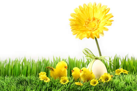 Little chicks on the green grass with flowers
