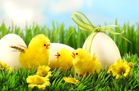 Little yellow easter chicks in the tall grass with eggs