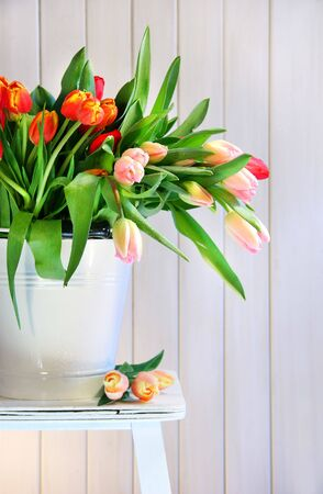 Colored spring tulips on an old bench Stock Photo - 2533385