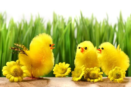 Yellow chicks hiding in the grass with flowers photo