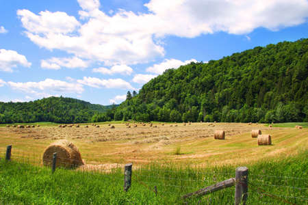 Harvesting the hay in August Stock Photo - 2538557