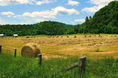 Hay cutting time in the Laurentiens, Quebec Stock Photo - 2538554