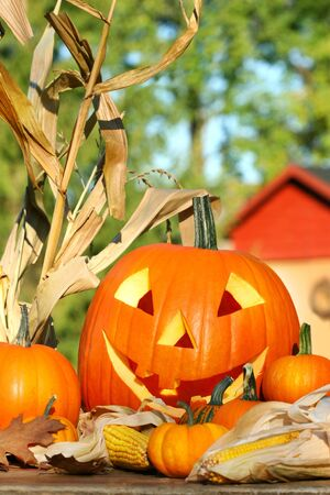 gourds: Autumn harvest with scarved pumpkin and gourds