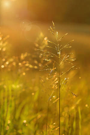 Golden glow in the early evening Stock Photo - 2564320