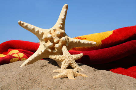break: Starfish in the sand against a blue sky Stock Photo