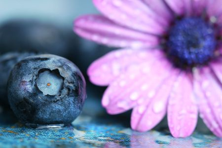 Macro shot of a blueberry and daisy photo