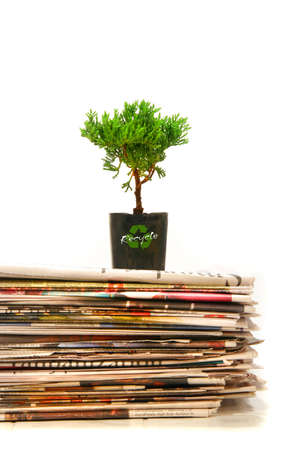 Small plant on top of a pile of newapapers photo