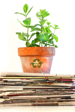 biodegradable: Potted plant on a stack of newspapers against white background Stock Photo
