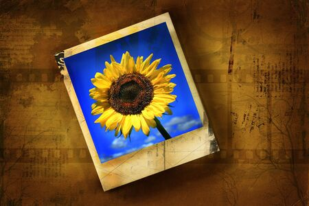 creative shot: Old polaroid picture with sunflower against grunge background Stock Photo