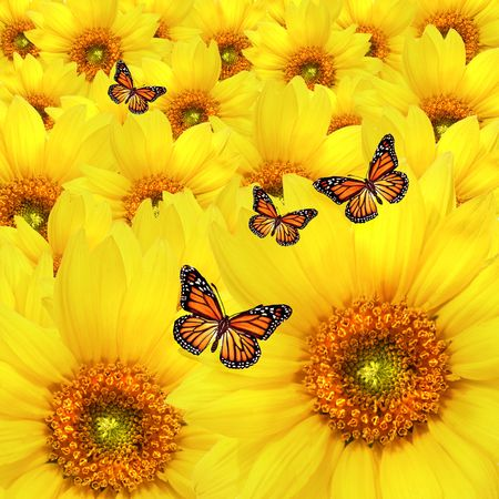 Yellow sunflower flowers Atop One Another Stock Photo - 3632727