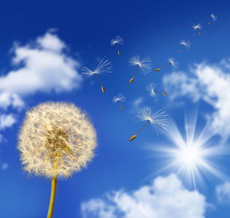 Paardebloem zaden waaien in de wind tegen de blauwe hemel Stockfoto