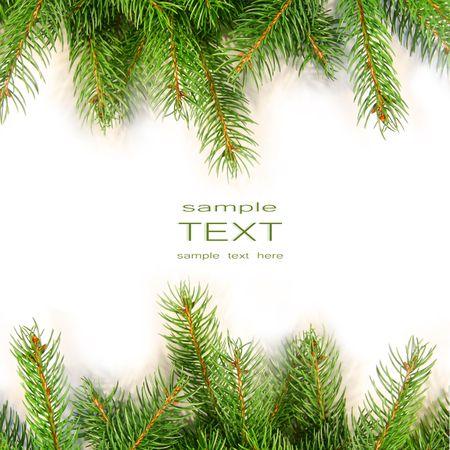 spar: Pine takken geïsoleerd op witte achtergrond