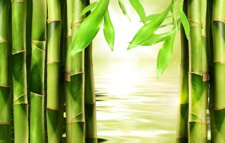 shoots: Brotes de bamb� apiladas junto con el agua